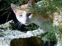 201204g8-Chats