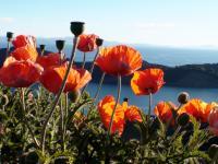 201206g8-Fleurs