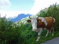 un 18-mai sur la-route-Serpentine en Croatie