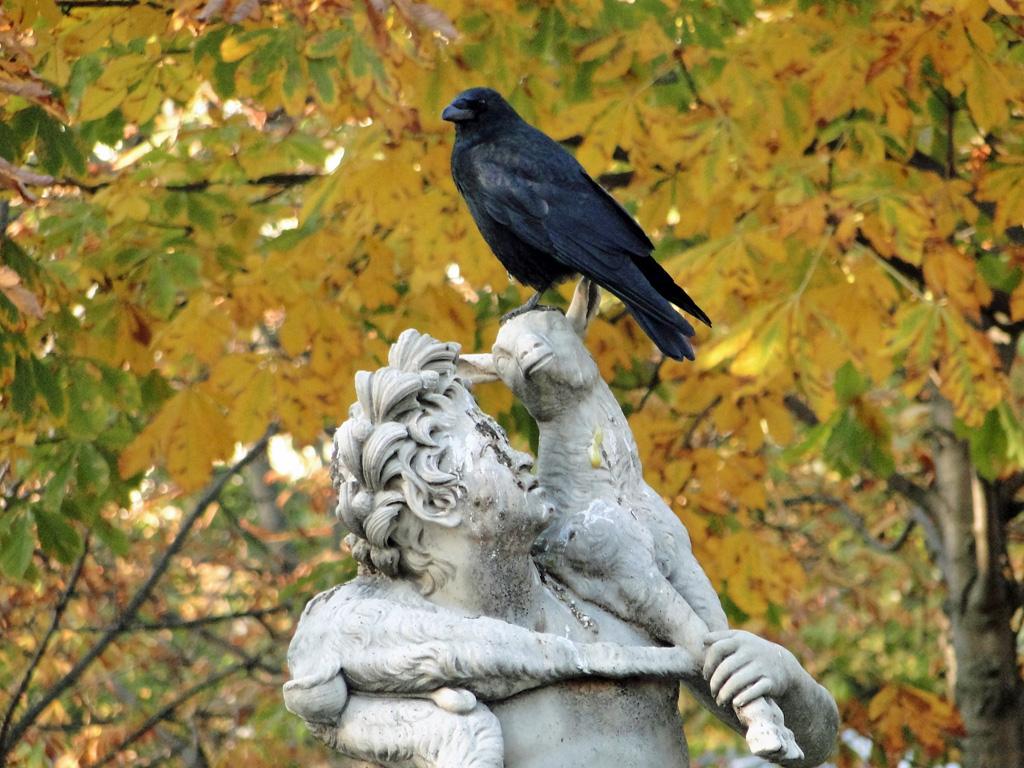 Les corbeaux, corneilles, pies...
