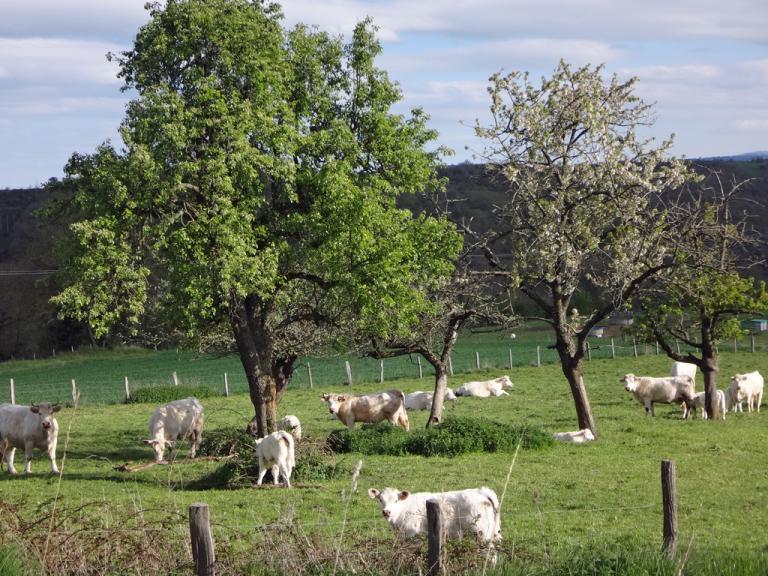 Auvergne-P17b