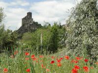 coquelicots-chateau