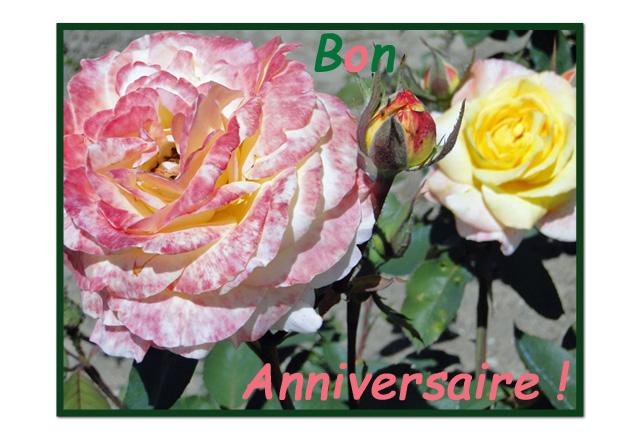 Anniversaire-roses-Javerdat