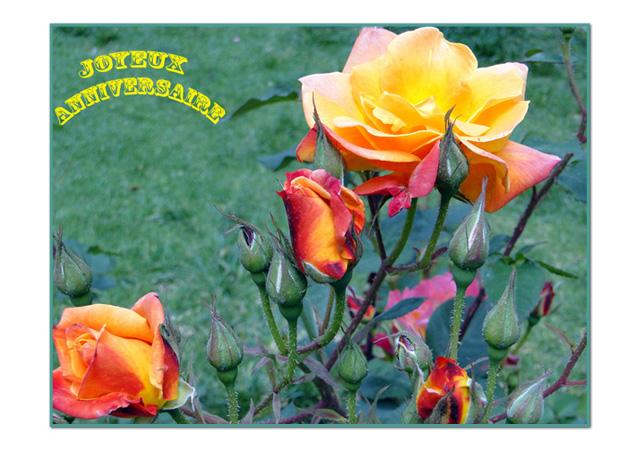 Roses-Pérou