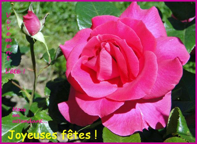rose-fêtes