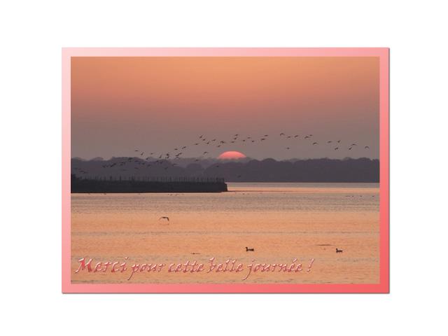 Soleil-Vol-d'oiseaux
