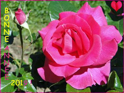 Rose2019