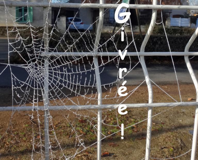 araignée-givrée