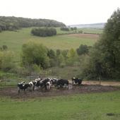 La campagne à Vroncourt