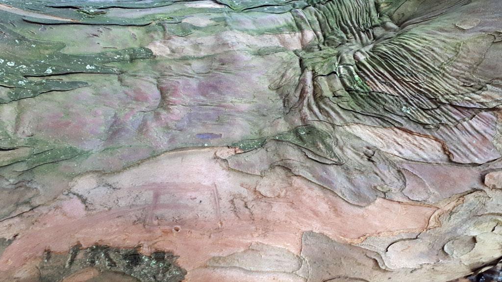 Écorce de tronc d'arbre