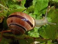 202101g8 les escargots -snail4