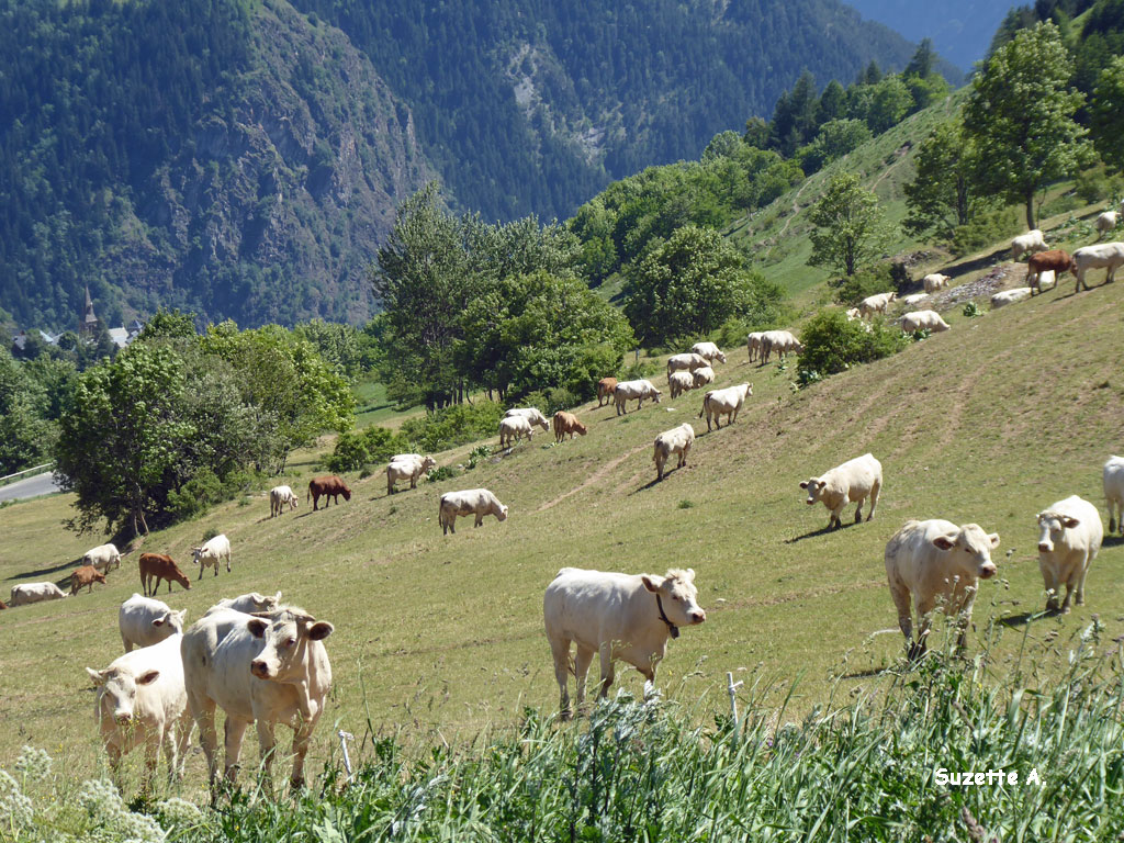 Alpes18a