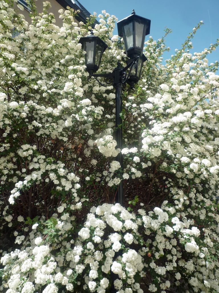 201606-Arbres au printemps