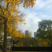 automne-parc-de-Choisy1