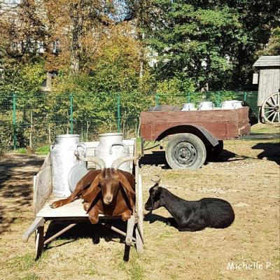 bouc&chèvre
