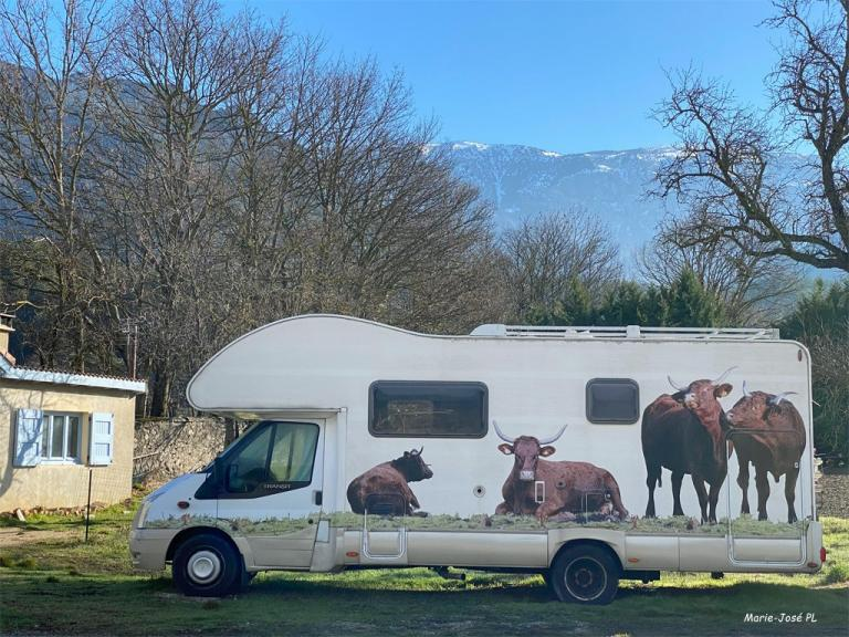 Camping cow