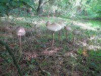 201710-Sous-bois avec champignons