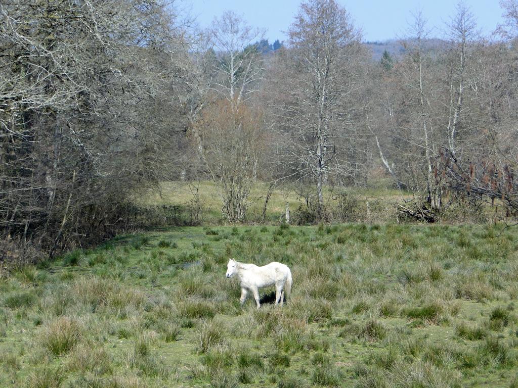 Oradour3