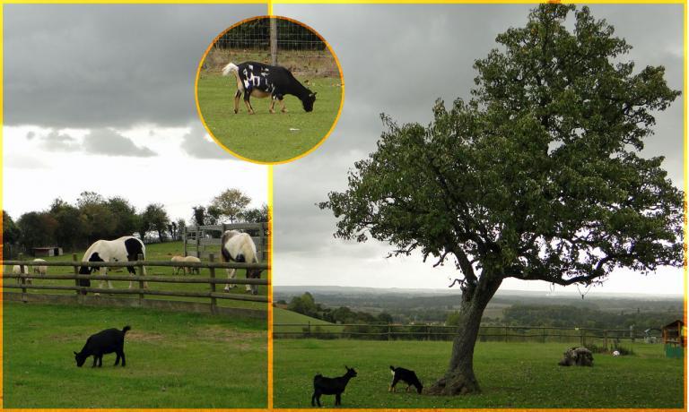 Chèvres-Eure
