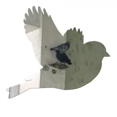 corneille, leurre à pigeon