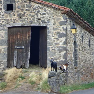 Deux chèvres