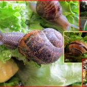 202101-Les escargots