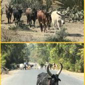 éthiopiennes