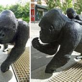 Gorille bar