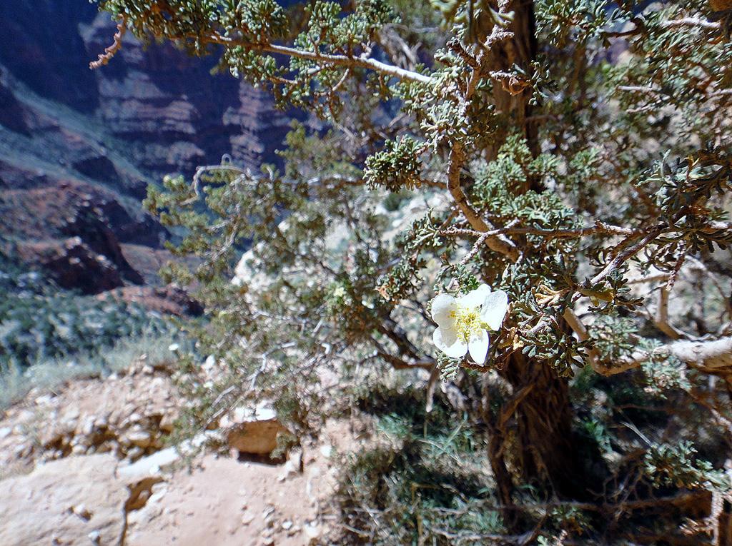 Grand-canyon-23