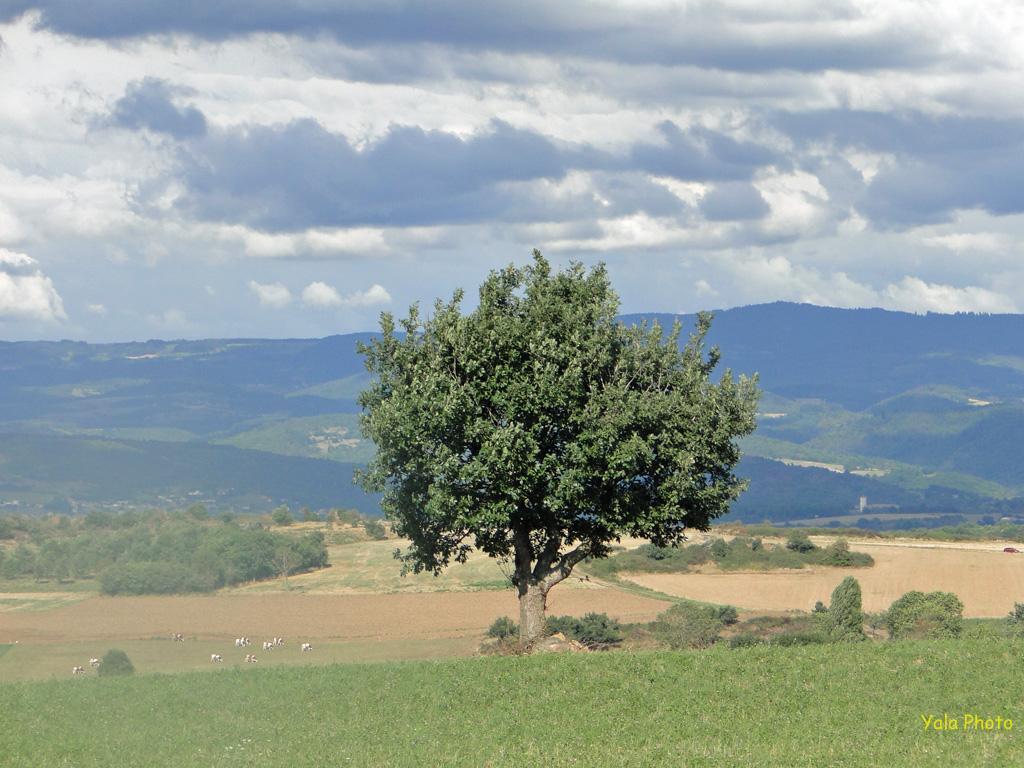 Haute-Loire-E16