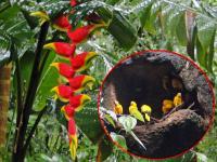 Iguapluie