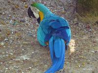 Iguazu mj3