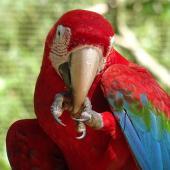 Iguazu mj4