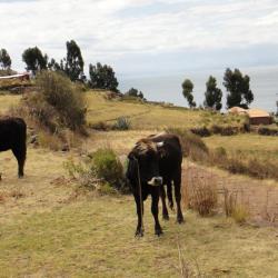Ile-de-Taquile1