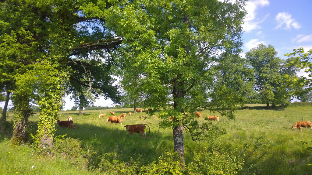 Limousin20150523