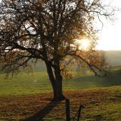 Lyons-la-forêt1
