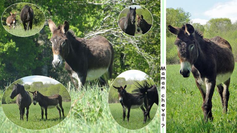 maman-cheval