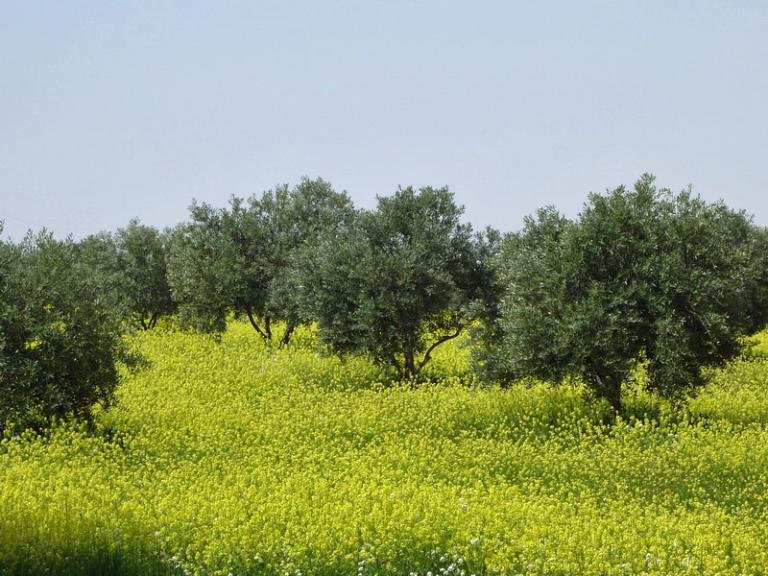 printemps jordanien