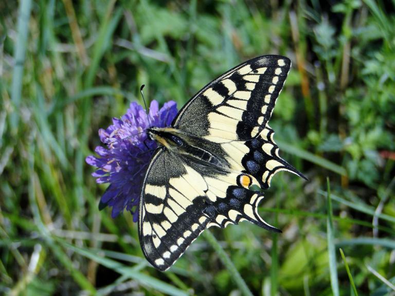 201507-papillons