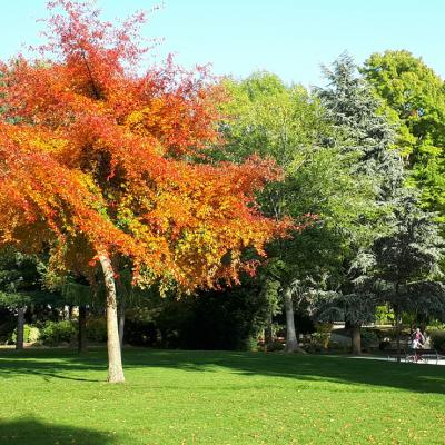 Parc-Limoges