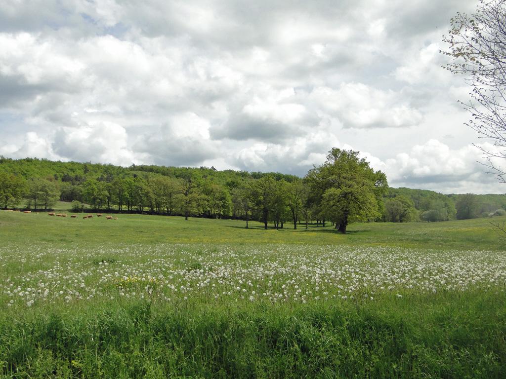 Haute-Loire2
