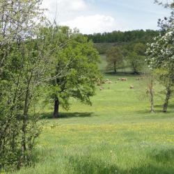 Haute-Loire3
