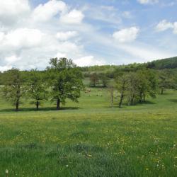 Haute-Loire5