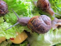 202001-Les escargots-snail6