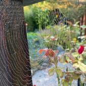 202109-toiles d'araignée-Toila8