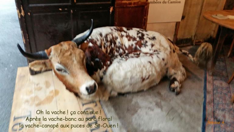 vache-canapé