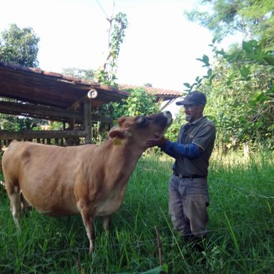 Vache-ML
