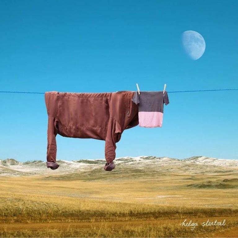 Vache sur le fil