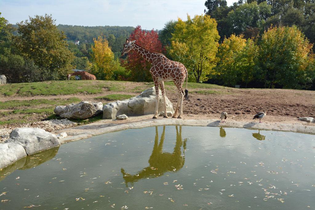 Zoos et Singes