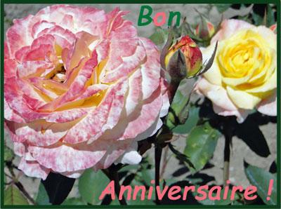 Anniversaire roses javerdat